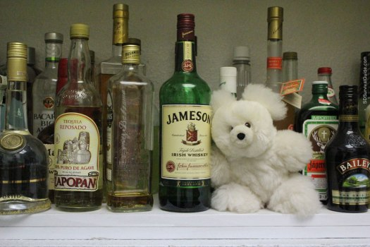 fuzzy-bear-hanging-out-with-alcohol