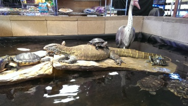Pet Kingdom is my favorite zoo in San Diego and yes that is a real alive lizard.