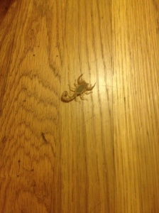 My friend Alexis found a live scorpion when she unpacked her luggage in America.