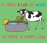 dairy-drought-takes-a-lot-of-water-to-make-happy-cow