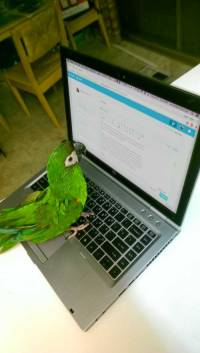 parrot-with-laptop---macaw-birdbird